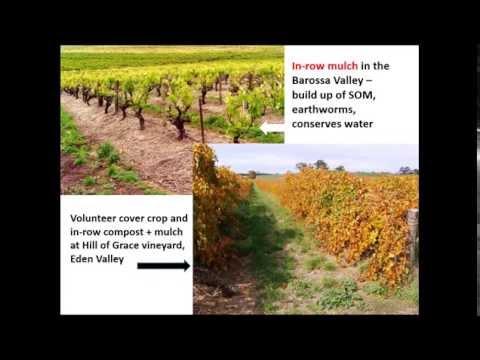Soil health (The Australian Wine Research Institute webinar recording)