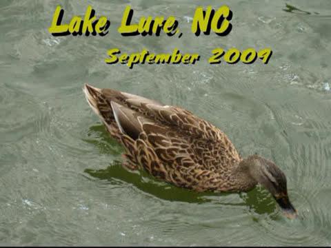 Carolina in my Mind - Lake Lure NC Memory