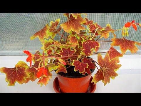 Что делать с комнатными растениями осенью?