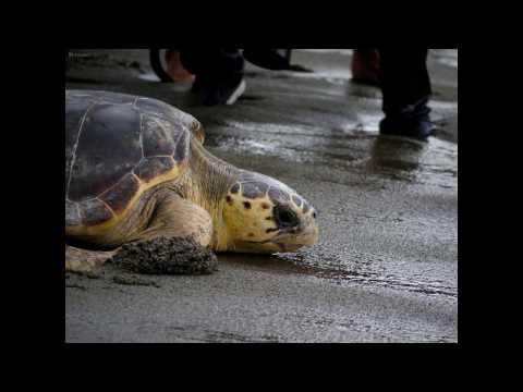 Il giorno delle tartarughe