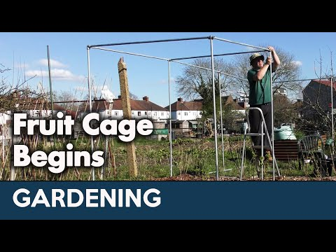 gardening-diary-93:-fruit-cage-begins-erection-|-march-year-3