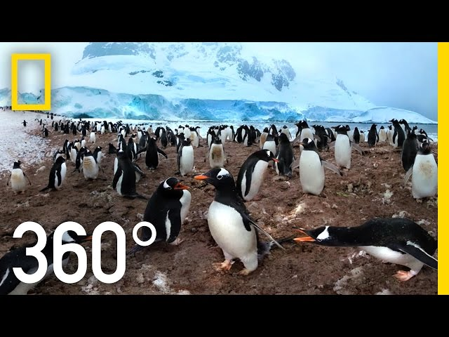 360° Antarctica - Unexpected Snow | National Geographic