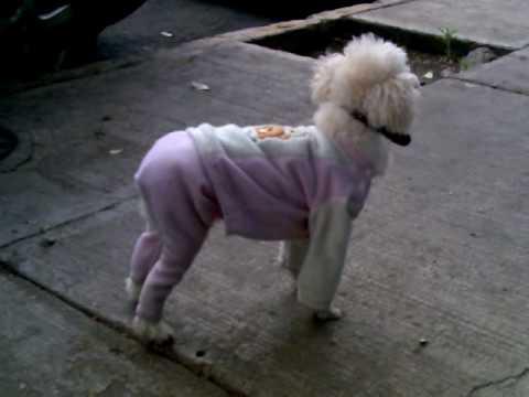 como hacer ropa para perro, la muestra - YouTube