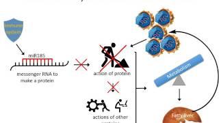 Host-Virus Interaction in HCV infection