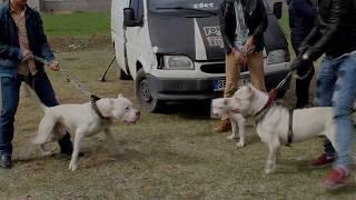 Kayseri Pitbull Ailesi (Official Video Klip)