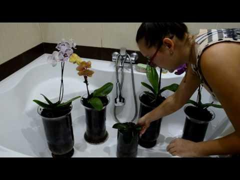 Первые шаги после посадки орхидей! Первый полив!
