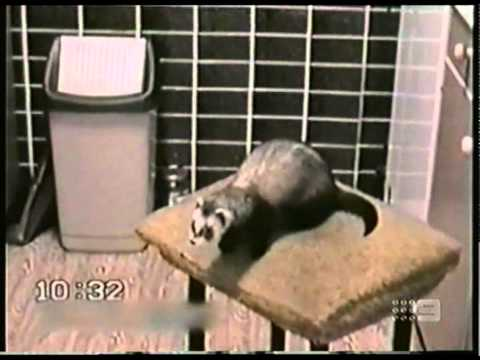Australia's Funniest Home Videos (1)