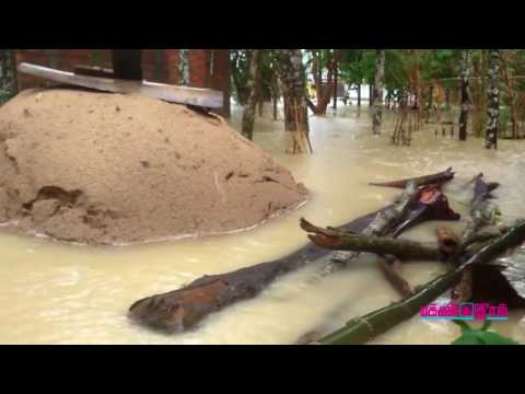 Assam Flood News