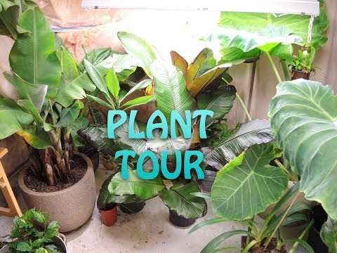 Let's look at ALL of my plants