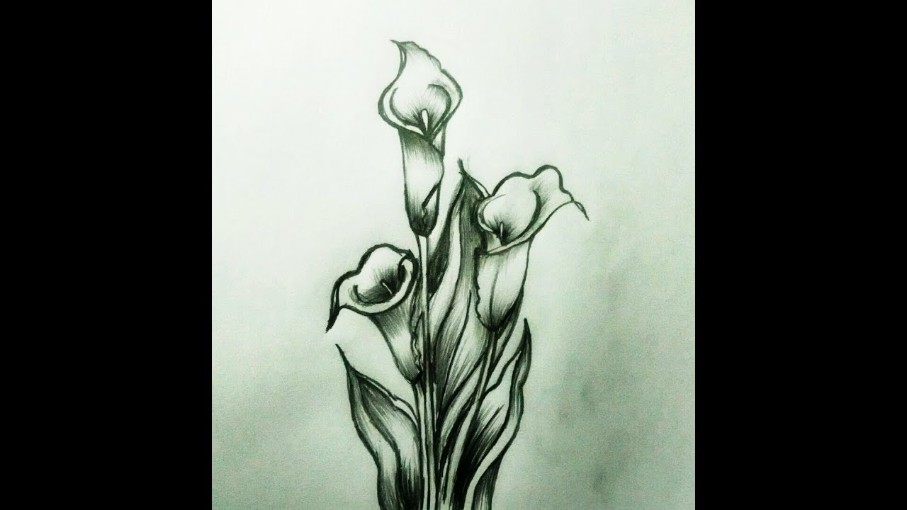 Calla Lilly Flower Pencil Shading | Calla Lilly Pencil ...