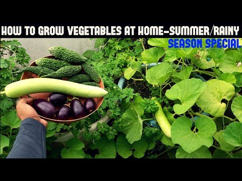 grow vegetable at home