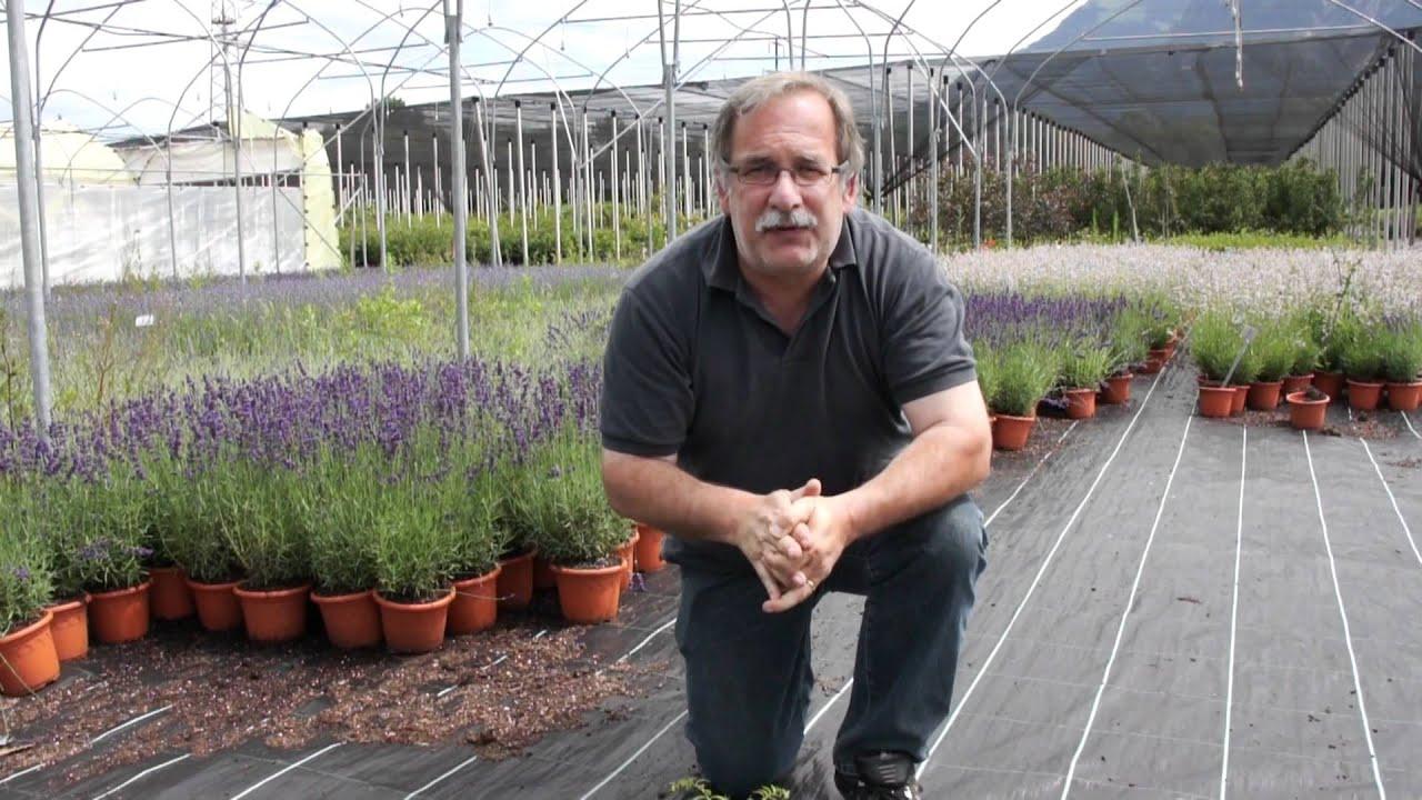 Die Vorteile Der Grossen Bodendecker (vinca Minor) - Youtube Bodendecker Vinca Minor Garten