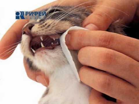 Как помазать десна коту