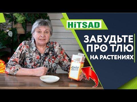 Супер Средство Пищевая Сода Против Тли ✔️ Опрыскивание содой в саду