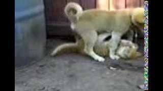 Собака перепутала  кота с собакой(, 2013-12-02T07:48:16.000Z)