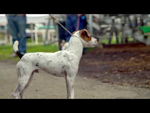 Jack Russell Terrier (JRTCA) National Trial