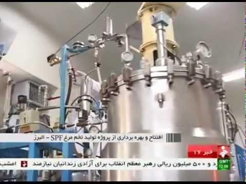 Iran Alborz province, SPF egg production توليد تخم مرغ اس پي اف استان البرز ايران