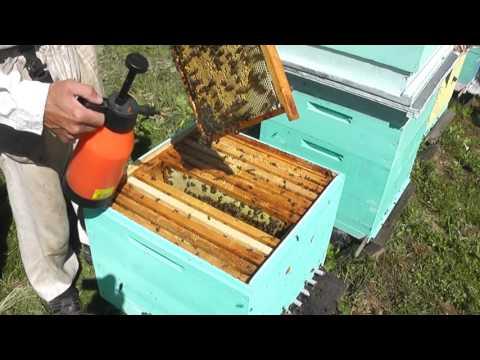Вирусный паралич пчел лечим лозевалем