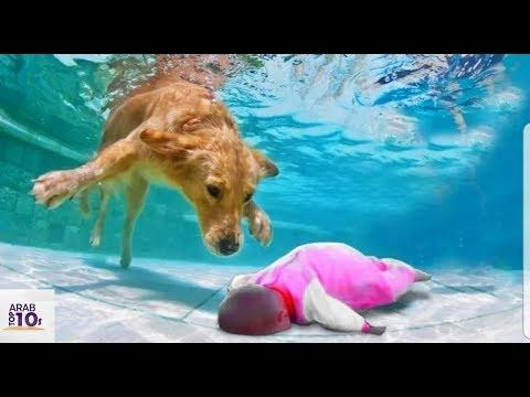 سقط طفل رضيع في البركة امام أعينهم | لن تصدق ماذا فعل الكلب فورا شاهد المفاجأة
