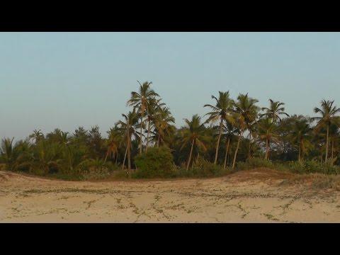 От Joecons beach resort до пляжа. Индия. Гоа