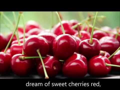 forest gump song lyrics