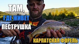 Ловля ручьевой форели. Рыбалка в Карпатах. Как ловить форель в горной реке.