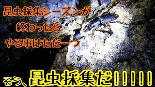 夏はまだ終わらせねぇ...【昆虫採集】【クワガタ・カブトムシ】 thumbnail
