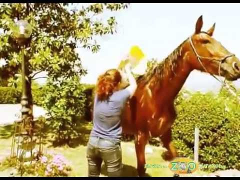 Шампунь для лошадей