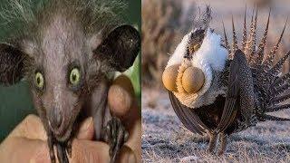 Прикол. Приколы с животными, подборка смех до слез | Funny  animals