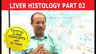 Liver Histology 2/7