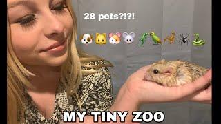 Meet All My 28 Pets Updated 2021