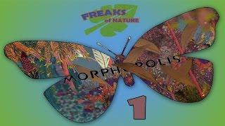 Bugs And Insects, Insects And Bugs ! - MORPHOPOLIS - Part 1 [Freaks Of Nature]