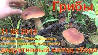 Грибы дедуктивный метод сбора 31 08 2018 Белый гриб рыжик маслята лисички волнушки Сбор грибов охота