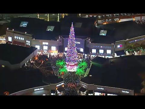 Justin The Web Guy - World's Tallest Live-Cut Christmas Tree Gets Lit Up In California!