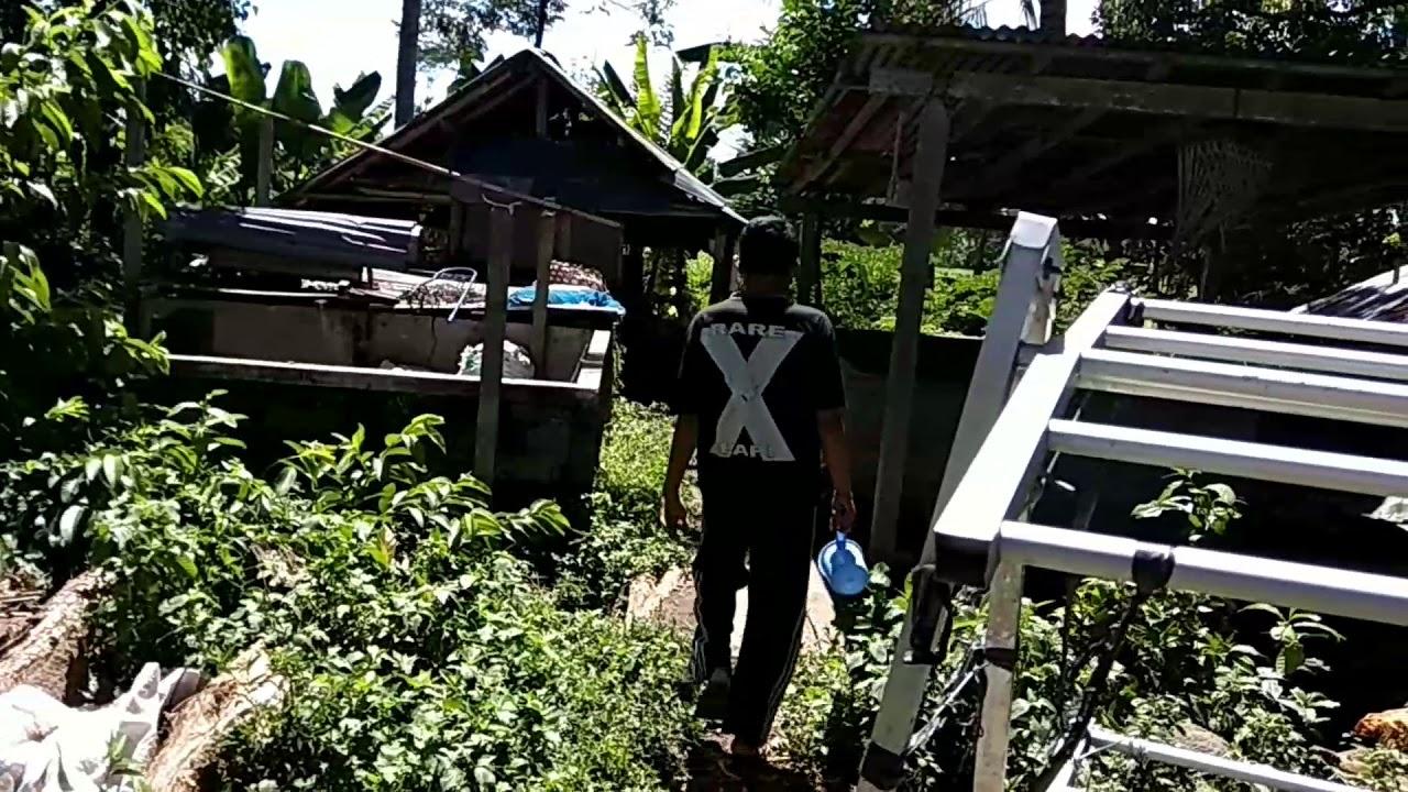 Lawak Bali ngejuk celeng Anggo kuningan    KOMEDIAN BALI CREATIF bikin  ngakak😂
