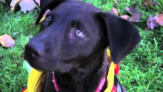 Adopt Me!:  Wesley