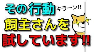 【犬 しつけ 噛み癖 甘噛み】飼主さんをためしている行動と対応法!!新!遠藤エマチャンネル【犬のしつけ@横浜】