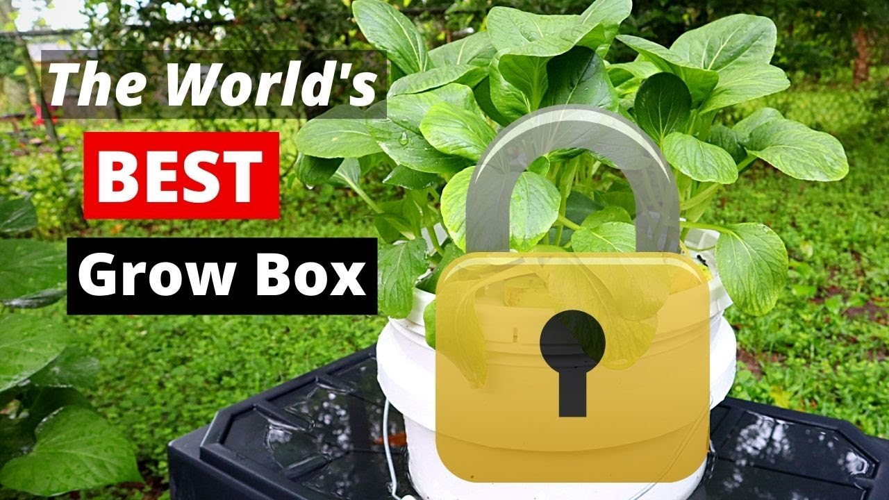 Secret Revealed! The BEST Hydroponic Grow Box Ever!