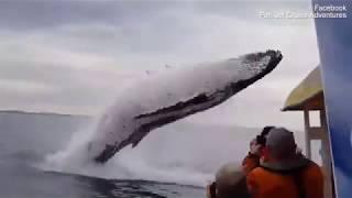 حوت أزرق كاد أن يحطم قاربا سياحيا في المحيط! (فيديو)