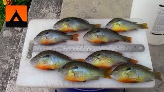 How to fillet small bluegill and rock bass