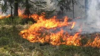 Świadomi zagrożenia - pożar w lesie a gospodarka leśna