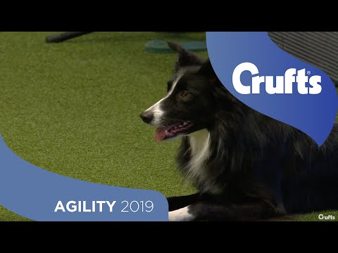 Agility  Kennel Club British Open Final (Jumping) - Medium