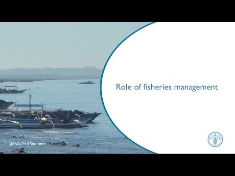 Role Of Fisheries Management