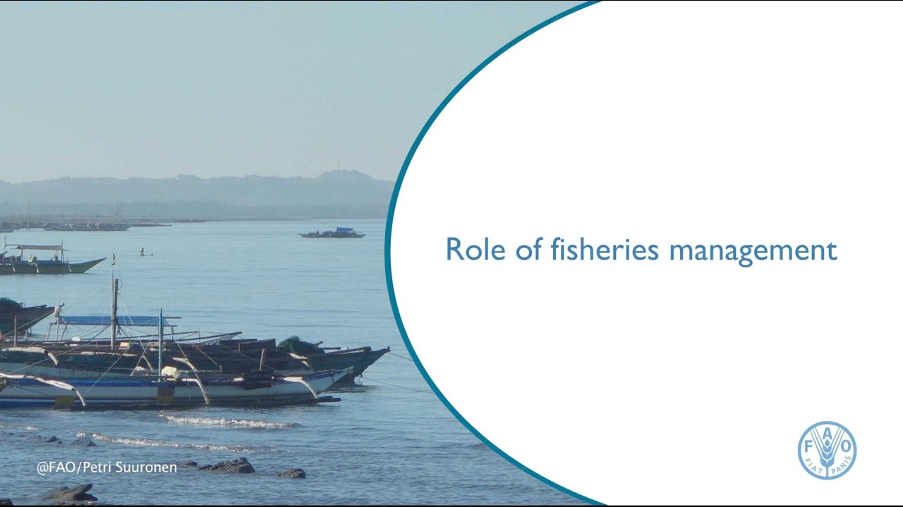 role of fisheries management youtube