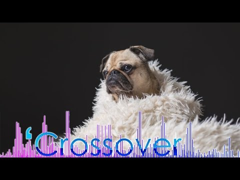 Crossover— Pet Culture in China 12/24/2016 | CCTV