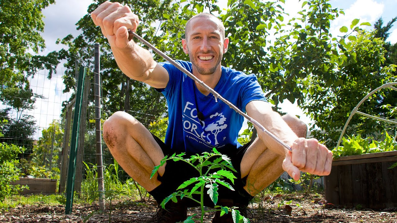 How to Easily Prune and Stake Tomatoes   Earlier Harvests, Bigger Yields, and Healthier Plants