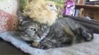 Смешное видео о животных.Для детей и не только(Подборка веселых кадров о животных для детского просмотра.Поднимите себе настроение.#смешноевидеооживотных., 2016-10-08T06:19:01.000Z)