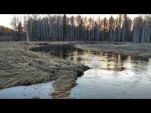 Три трагедии за выходные: в Костромской области утонули трое детей