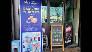 강릉 중앙시장 맛집 '팡파미유' 육쪽마늘빵 (신기함주의…