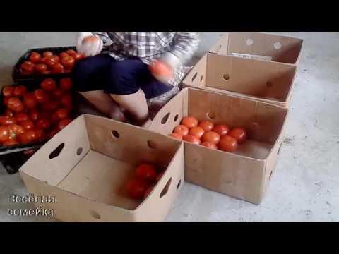 Вопрос: Сколько кг помидор в ящике?